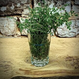 Herbs Unlimited Fresh Thyme