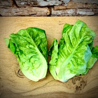 British Little Gem Lettuces
