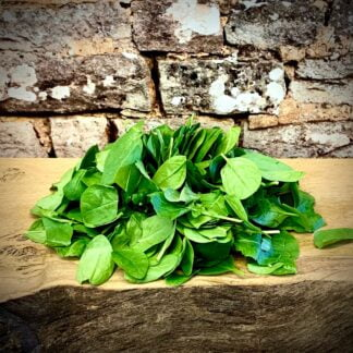 Herbs Unlimited Baby Spinach